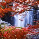 みたらい渓谷の滝と紅葉